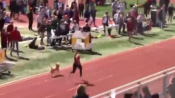 ABD'de tribünden atlayan köpek atletizm yarışmasını birincilikle bitirdi - Sputnik Türkiye