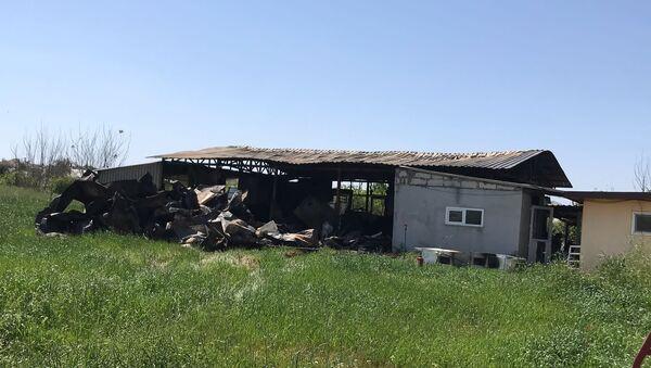 Antalya'da çekirge üretim merkezinde yangın: Anaç böceklerin tamamı yandı - Sputnik Türkiye