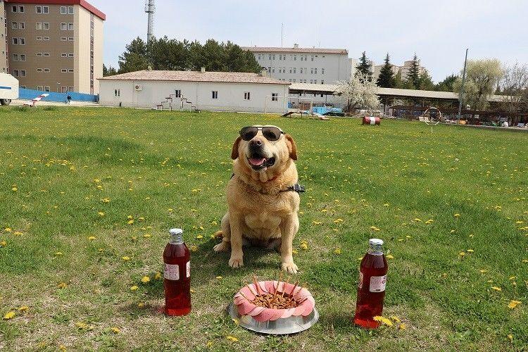İz takip köpeği Hisar, emekli oldu