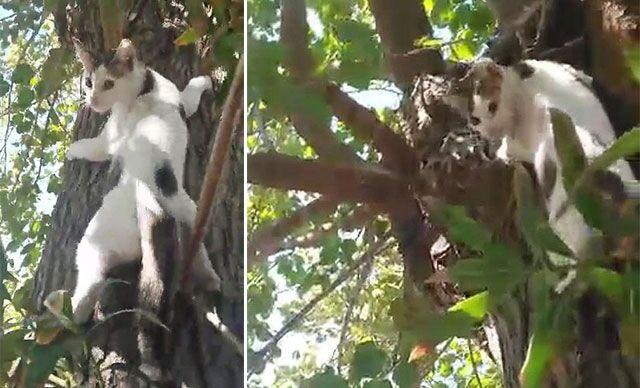 Denizli'nin Pamukkale ilçesinde pansiyon işleten Orhan Yıldız'ın, dut ağacında mahsur kalan 3 aylık yavru kedisini kurtarma çabası gülümsetti. Yıldız, bir yandan telefonla görüntü çekerken bir yandan da kediye yöresel şive ile talimatlar vererek ağaçtan inmesini sağladı.