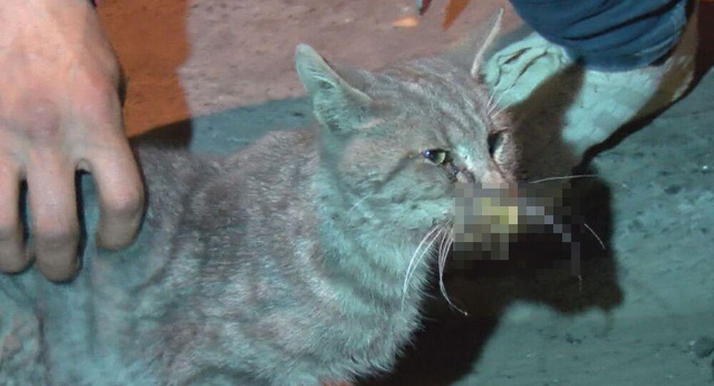 Gaziosmanpaşa'da kedilerin zehir verilerek öldürüldüğü iddiası