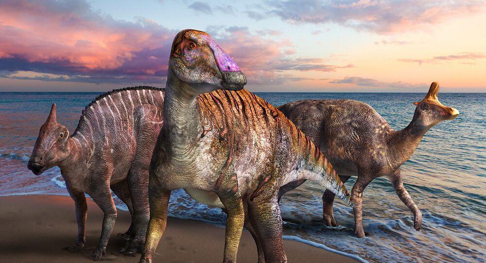 Ördek gagalı dinozor, fosil, Japonya