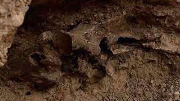 Buz Devri'nden kalma bir at fosili bulundu - Sputnik Türkiye