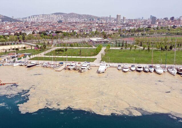 Anadolu Yakası, deniz salyası, beyaz örtü
