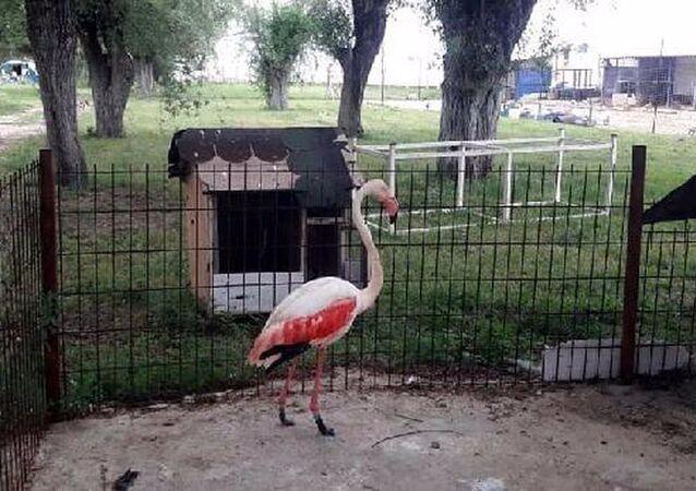 yaralı flamingo