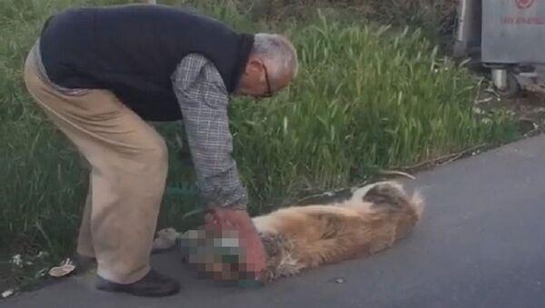 Boğazından bağladığı köpeği sürükleyerek çöpe bırakan adam gözaltına alındı - Sputnik Türkiye