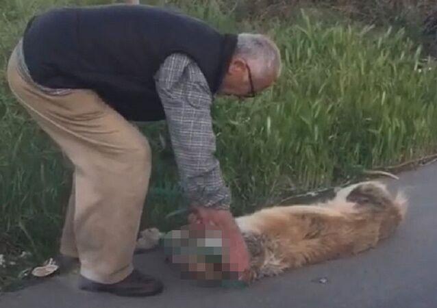 Boğazından bağladığı köpeği sürükleyerek çöpe bırakan adam gözaltına alındı