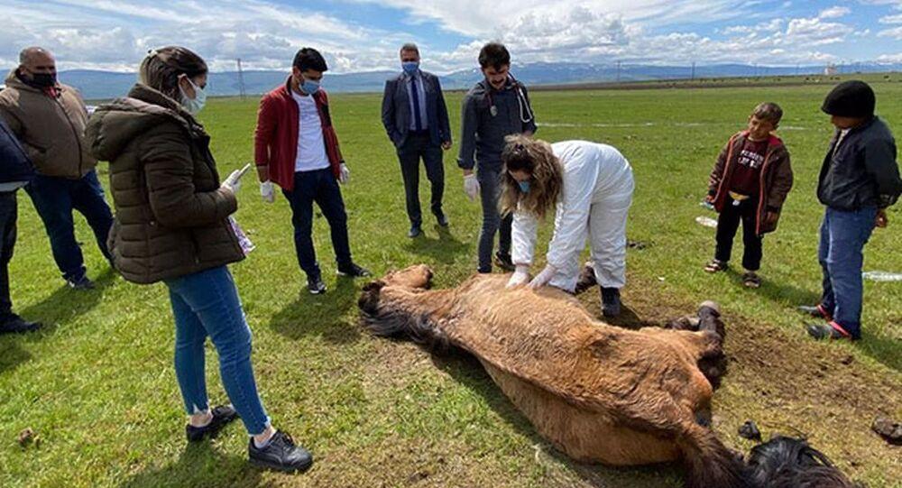 Ayağı kırılan atı elleriyle beslediler