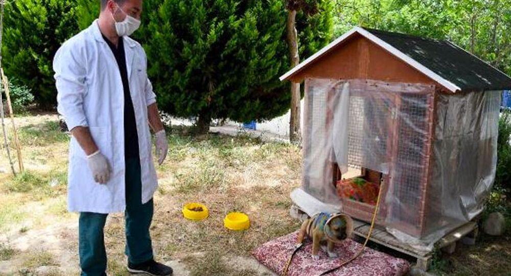 Aydın'da 3 aylık köpek, kulakları jiletle kesilmiş halde bulundu