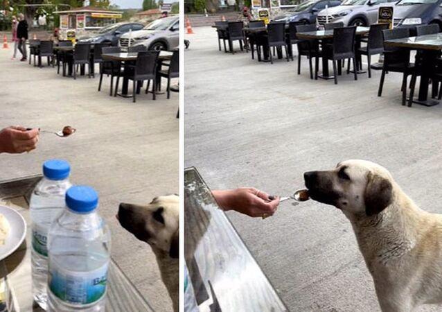 Köpeğe kaşıkla yemek yedirdi, sosyal medyada tartışma konusu oldu