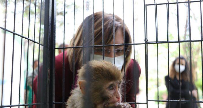 TöreneBüyükşehir Belediye Başkanı Fatma Şahin ve Büyükşehir Belediyesi Doğal Hayatı Koruma ve Hayvanat Bahçesi Daire Başkanı Celal Özsöyler katıldı. Başkan Şahin, koruma altına alınan makak maymunlarınıelleriyle besledi.