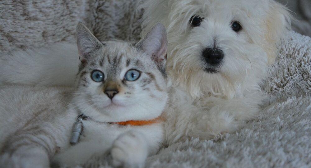 Kedi-köpek-hayvan
