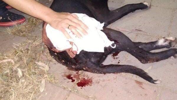 Maganda kurşunu köpeğe isabet etti - Sputnik Türkiye