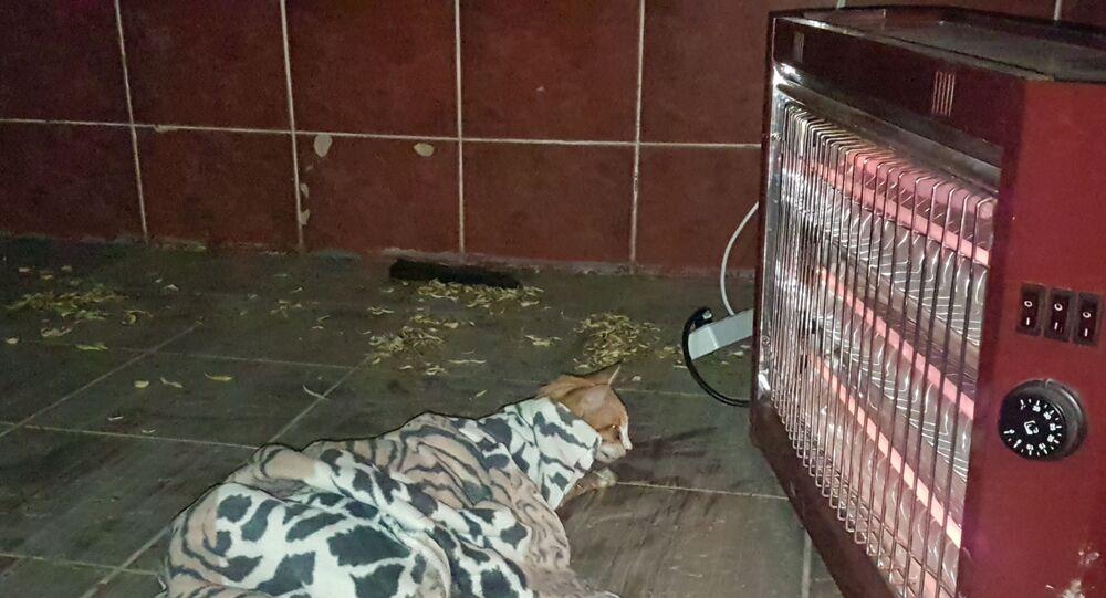 Gölete düşen kedi boğulmaktan son anda kurtarıldı