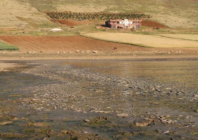Mardin, balık ölümleri