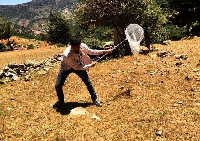 Gaziantep çekirge istilası