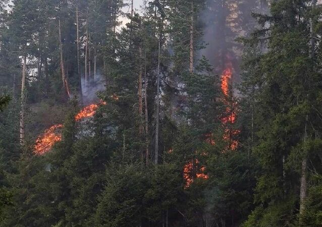 Artvin'de orman yangını