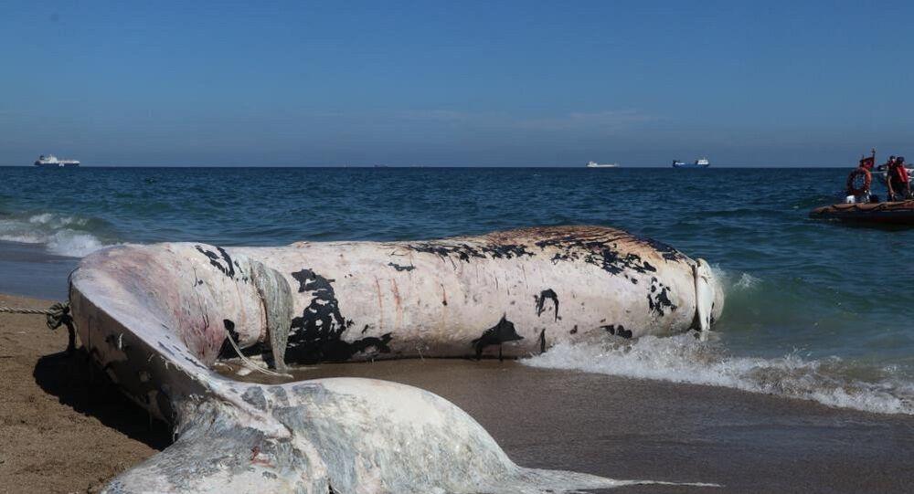 Sahile vuran balina
