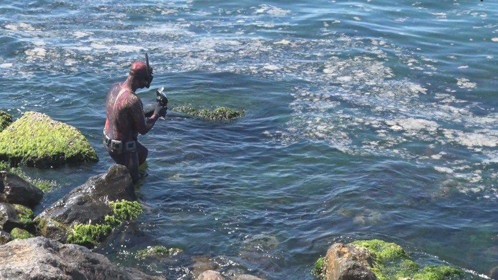 Şahintürk ayrıca  Deniz dibinde salyaları hala görebiliyoruz. Salyanın içerisinde hava kabarcığı var ve suda asılı bir şekilde duruyor şeklinde konuştu.
