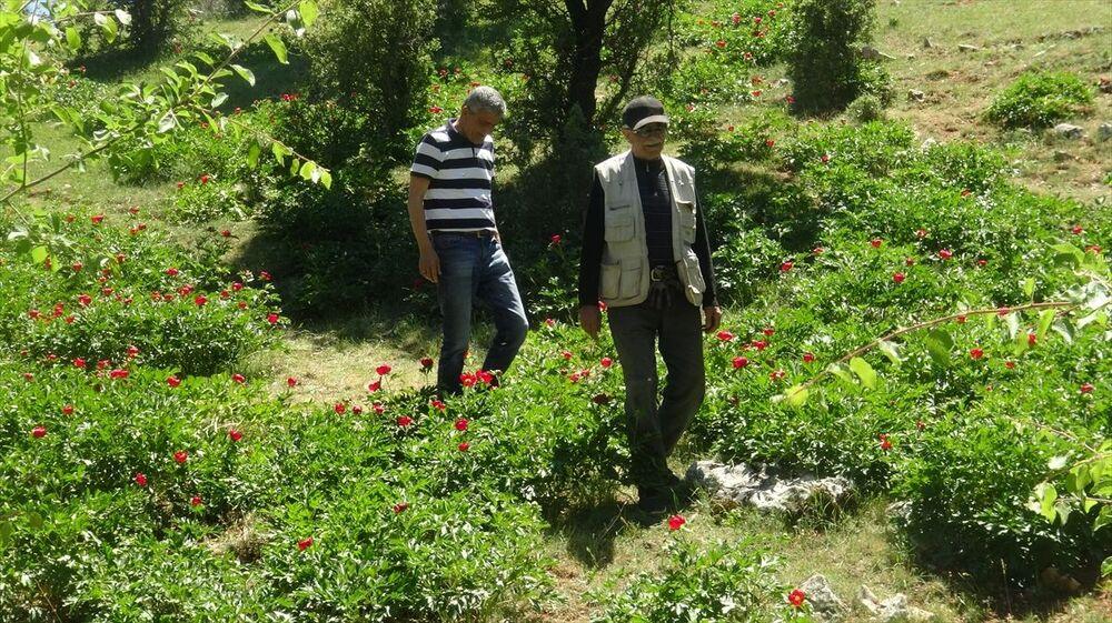 Doğa tutkunu Ali İşliyen de koruma altındaki kızıl laleleri gönüllü olarak kontrol ettiğini ifade etti.