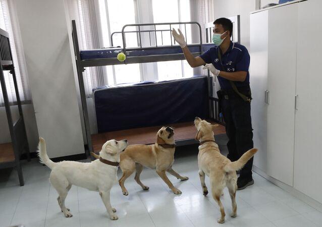 Tayland'da 'dedektör köpekler' Kovid-19'la mücadele kapsamında göreve başladı