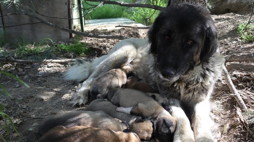 Bir şüphelinin Ankara'da anne köpeği kaçırdığı görüntülerin sosyal medyada yayılması üzerine 'Anneye ne oldu' etiketi, sosyal medyada gündem oldu. Binlerce kişi köpeğin durumunu merak etti. Köpeğin bulunduğu derneğin başkanı, Tecavüz edildiğini düşünüyoruz açıklaması yaptı.