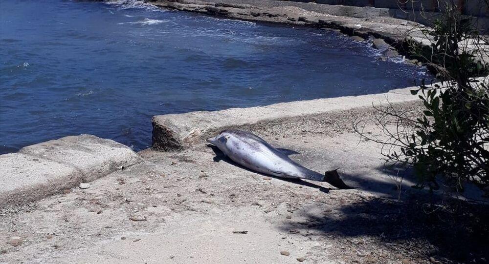 Didim'de sahilde ölü yunus bulundu