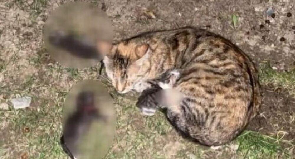 İstanbul Bahçeşehir-kedi yavruları-saldırı