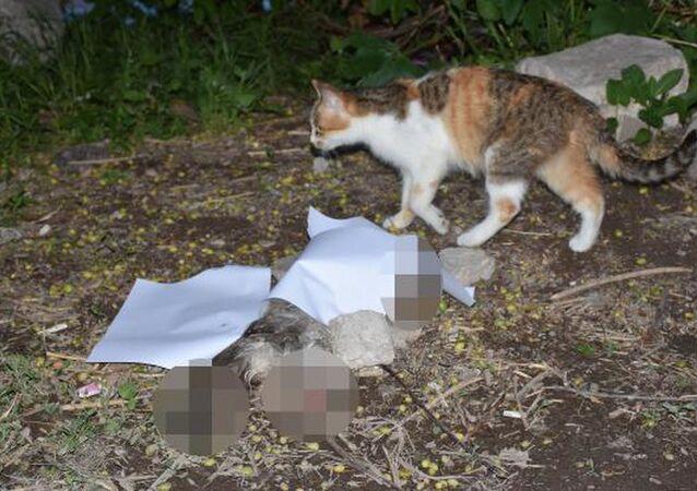 Sivas'ta 5 aylık kedi yavrusu, sahibi tarafından patileri ve kuyruğu kesik halde ölü bulundu