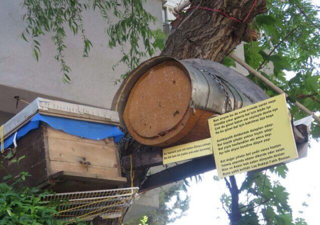 Kadıköy ortasında konan arı kovan