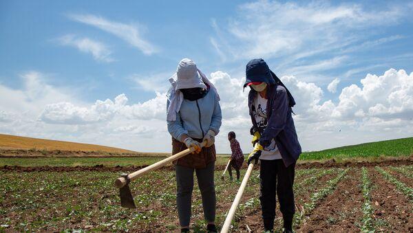 Sputnik'e konuşan işçilerin sorumlusu İhsan Yavuz, kuraklığın çiftçileri de tarım işçilerini de olumsuz etkilediğini söylüyor.  - Sputnik Türkiye
