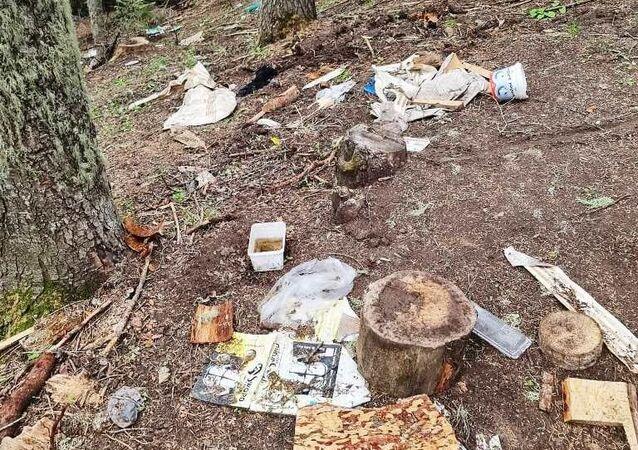 Orman / çevre kirliliği