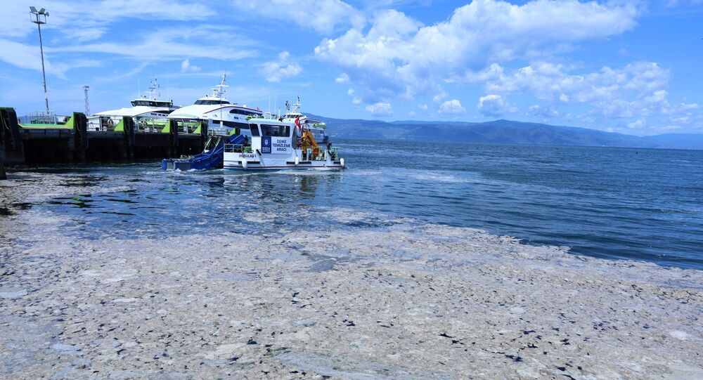 Marmara Denizi - deniz salyası - müsilaj