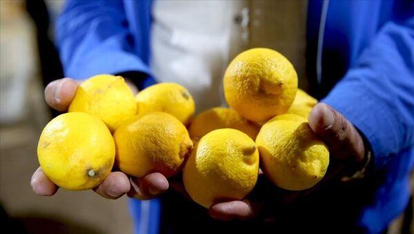 limon - Sputnik Türkiye