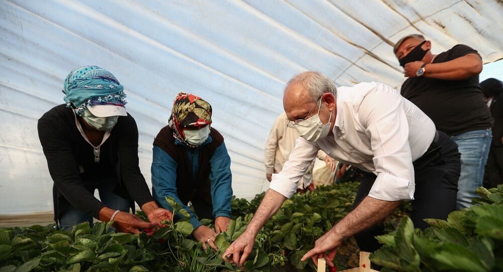 Cumhuriyet Halk Partisi Genel Başkanı Kemal Kılıçdaroğlu, Aydın programına sabah saatlerinde İncirliova ilçesinde tarım işçileri ile bir araya gelip, çilek hasadı yaparak başladı.
