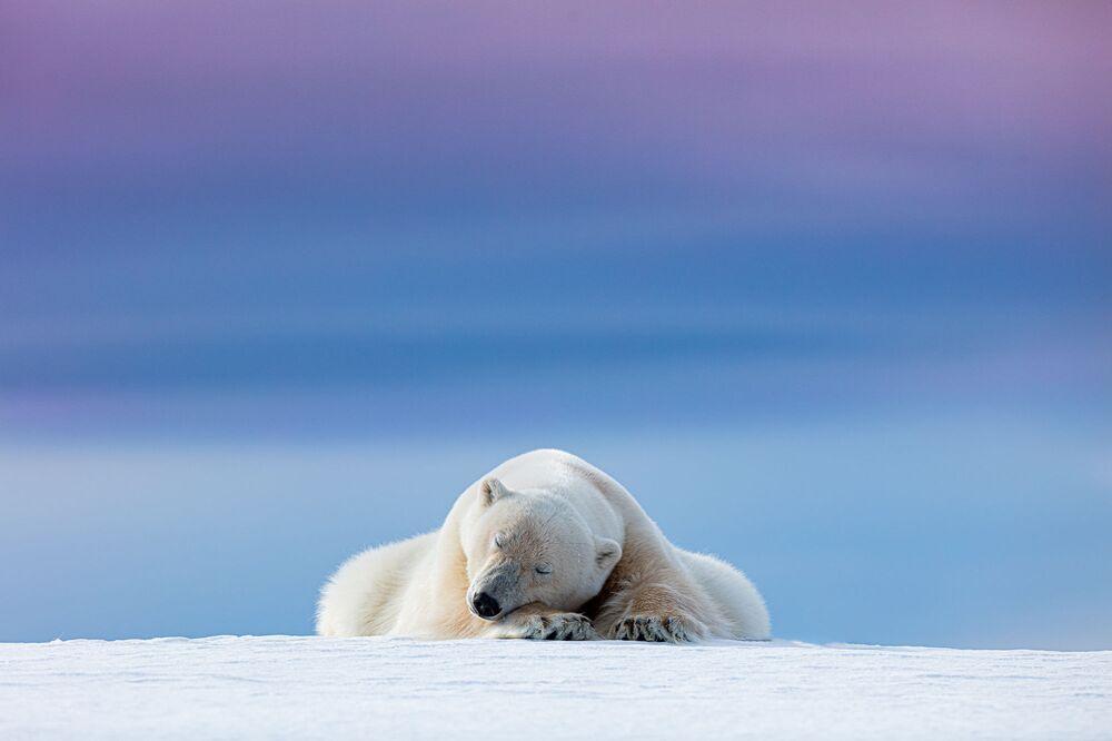Uyuyan kutup ayısı, Dennis Stogsdill'e yarışmanın 'Vahşi Hayvan Portreleri' kategorisinde birincilik getirdi.
