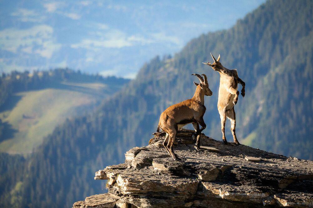 Raphael Schenker, 'Fight in the Mountains' adlı eseriyle, '16 yaş altı' kategorisinde ikinci oldu.