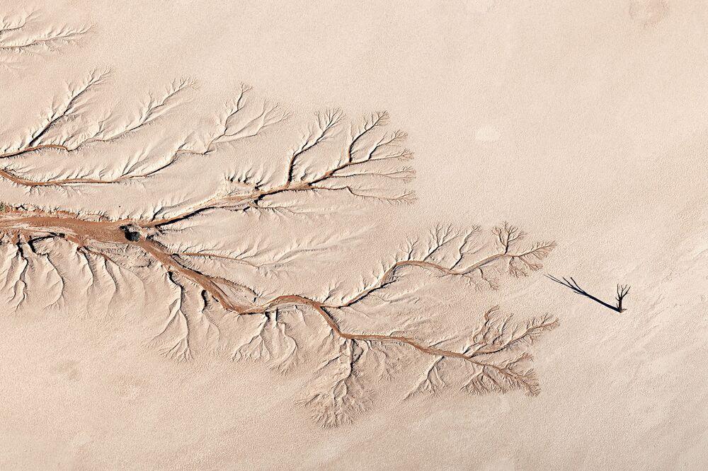Jay Roode'un 'Tree of Life' adlı çalışması, 'Manzara' kategorisinde birinci oldu.