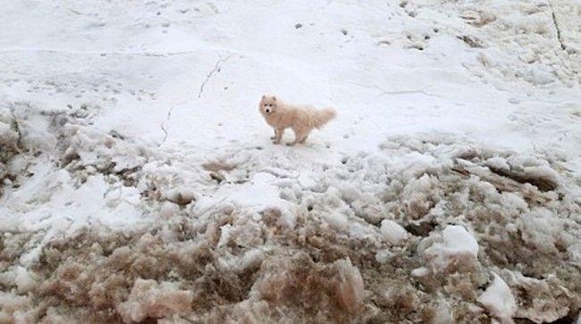 Kuzey Kutbu'nda görevli bir Rus buzkıran gemisi, buzullarda mahsur kalan kayıp köpeği kurtardı.