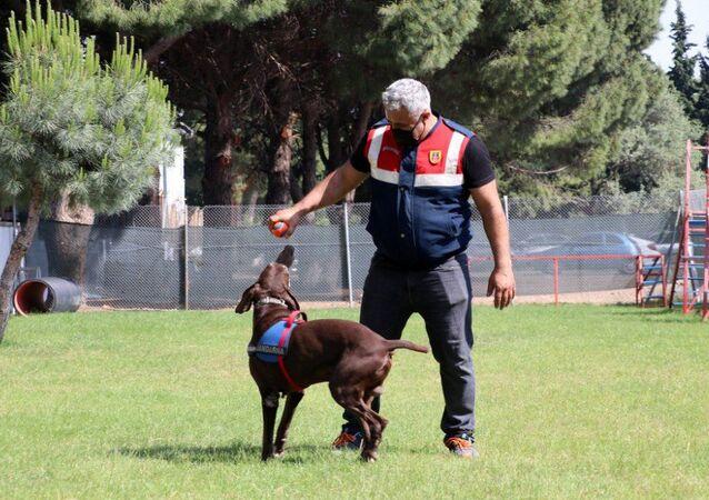 Dedektör köpek Volta'nın 'emekliliği' jandarma personelini üzdü