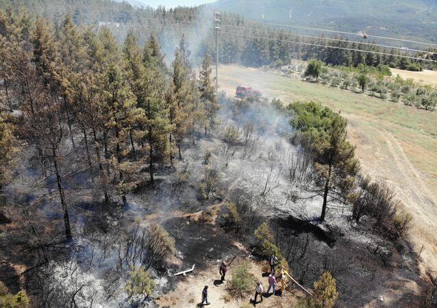 Arıcı hem kendini hem de ormanı yaktı