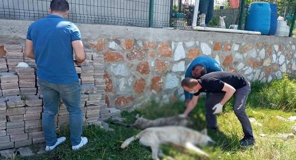 Yalova'da 7 köpek zehirlenerek öldürüldü