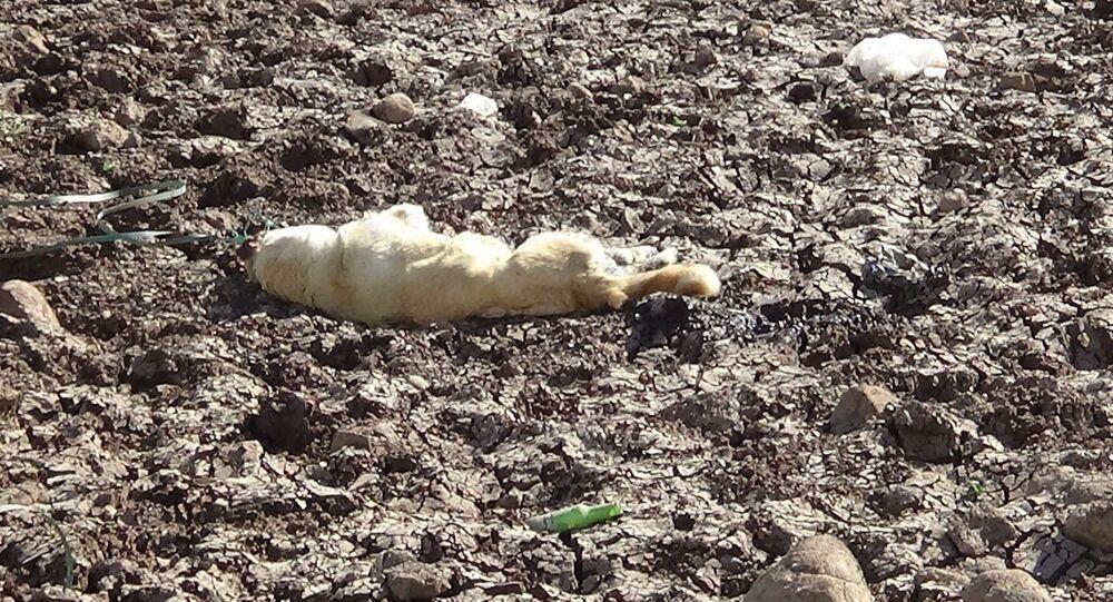 Diyarbakır'da bir köpek boynuna ip bağlanarak vahşice öldürüldü