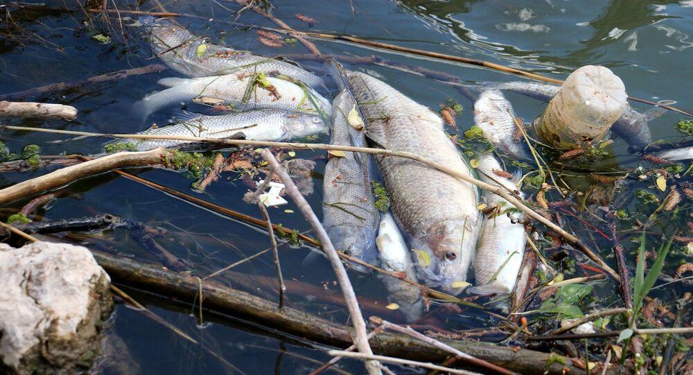 Türkiye'nin en uzun nehrinde toplu balık ölümleri