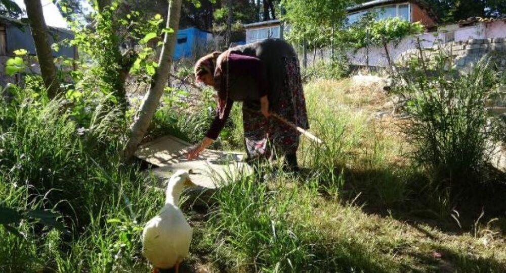 İstanbul Sultangazi Selfinaz Taşdemir'in ördekleri