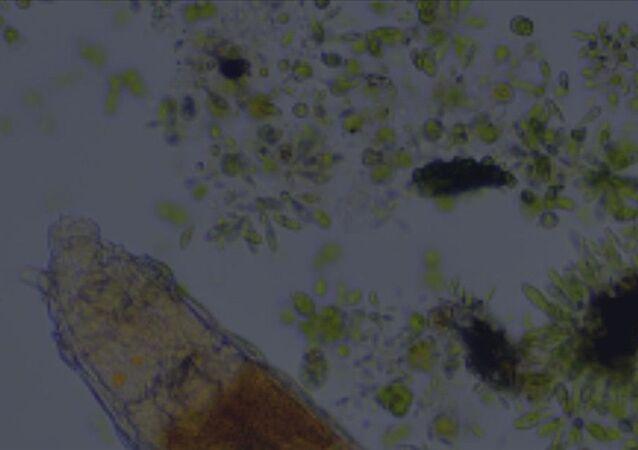 Donmuş toprak tabakasında bulunan mikroskobik canlının 24 bin yıl hayatta kaldığı keşfedildi