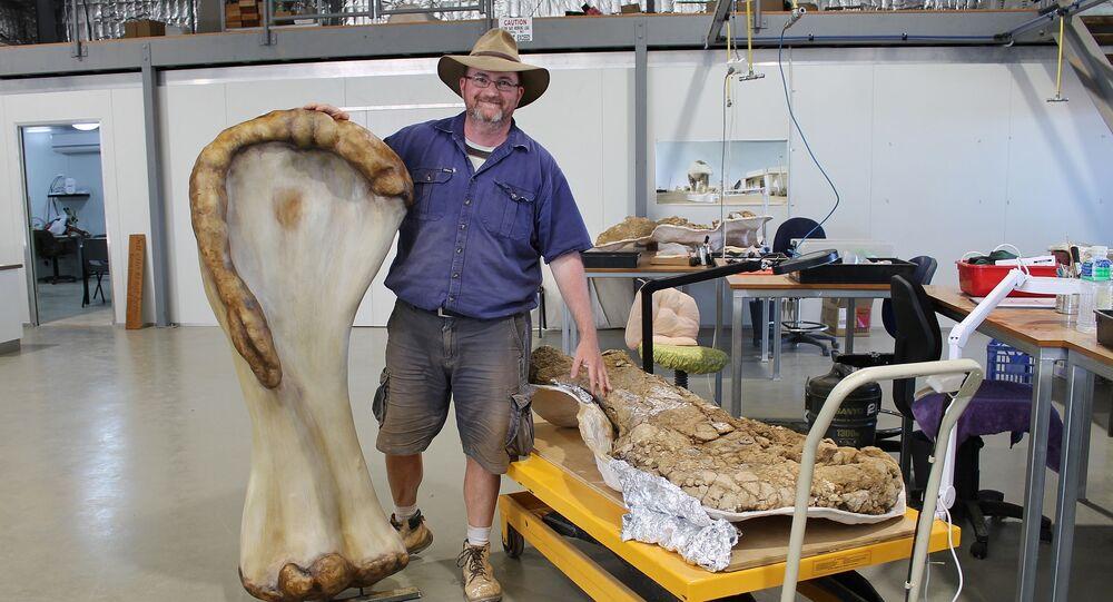 Avustralya'da ilk parçası 2007'de bulunan dinozor türünün kıtada şu ana kadar keşfedilen en büyük dinozor fosili olduğu ve dünyanın da en büyük türlerinden biri olduğu açıklandı.