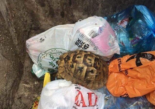 Çöpe atılan kaplumbağa