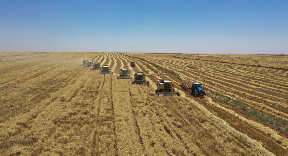 Ceylanpınar Tarım İşletmesi hasat biçerdöver