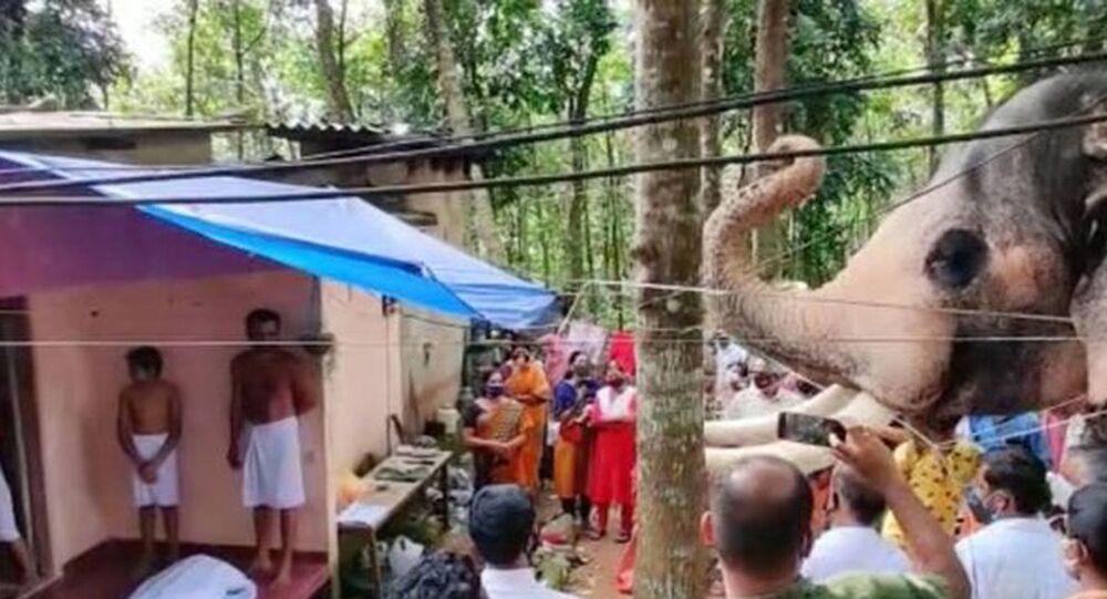 Hindistan'da bir fil, ölen bakıcısını son kez görmek için kilometrelerce yol yürüdü